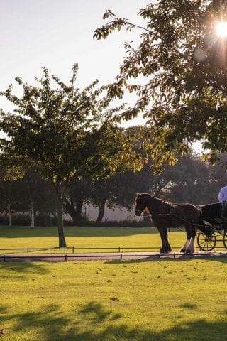 Horse and Carriage Ride through Phoenix Park Dublin